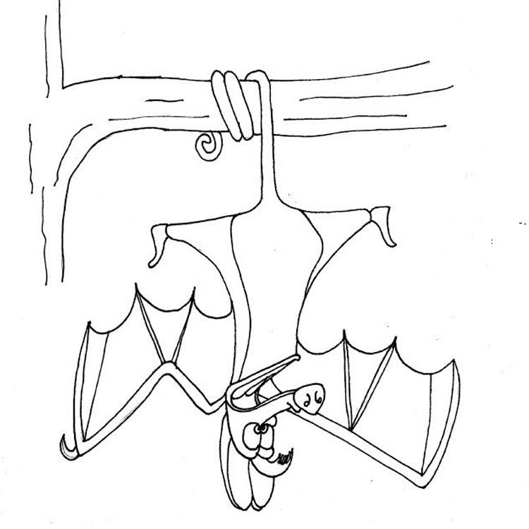 The Batsquatch Entry # 12