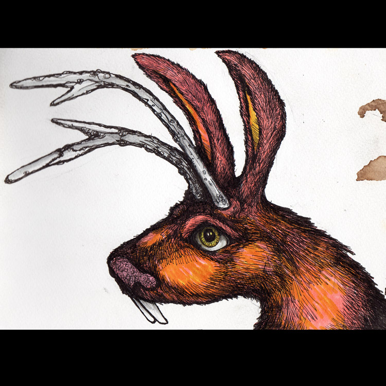 the Jackalope Entry # 14