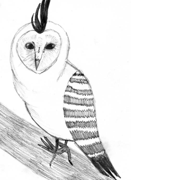 The Hootpecker Entry # 12