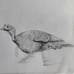 The Turkey (2016) Entry # 12